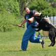 Stock Photo: Dog training