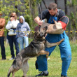 Dog training - Lizenzfreies Foto