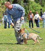 German shepherd training — Stock Photo