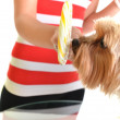 Yorkie with lollipop — Stock Photo