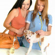 Veterinarian doctor making check-up of a dog — Stock Photo