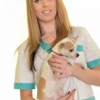 Female veterinary and a dog — Stock Photo