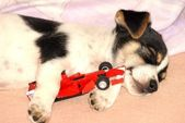 Dog sleeping near red car — Stock Photo