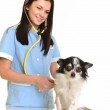 Stock image of female veterinarian with small dog over white background — Stock Photo #8683573