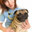 Veterinarian doctor with dog — Stock Photo #9133971