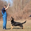 German shepherd - dog at a dog training center — Stock Photo #9639828