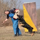 German shepherd - dog at a dog training center — Stock Photo