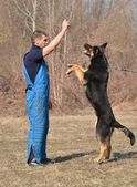 German shepherd - dog at a dog training center — Stock Photo