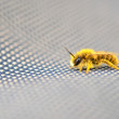 Bee macro - Stock Photo