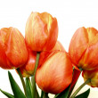 Beautiful spring tulips — Stock Photo