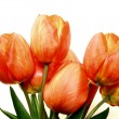 Beautiful spring tulips — Stock Photo #10262317