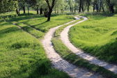 Beautiful forest road — Stock Photo