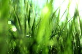 Green grass with dew in the morning — Stock Photo