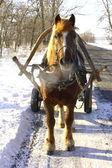 Красивая лошадь на зимней дороге — Стоковое фото