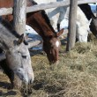 Stock Photo: Some thoroughbred horses on the farm