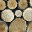 Stock of wood — Stock Photo #9925964