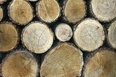 Stock of wood — Stock Photo