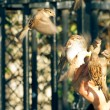 Sparrows eating from a human hand with motion blurred wings — Stock Photo #8678937