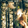 Sparrows eating from a human hand with motion blurred wings — Stock Photo