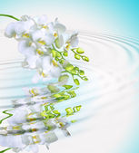 Beautiful white orchid — Stock Photo