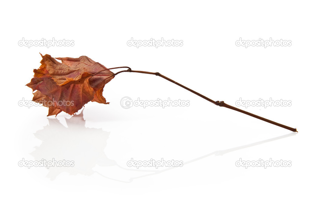Elegant autumnal leaf on white background — Stock Photo #8916812