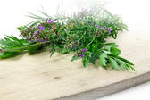 Chervil, parsley, oregano, thym — Stock Photo