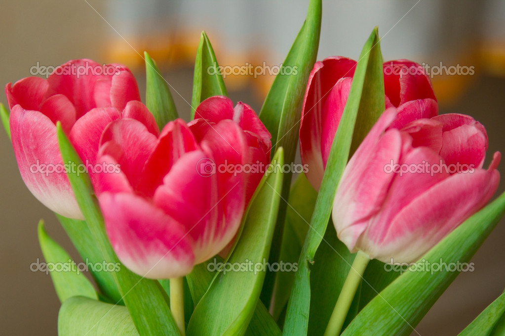 Spring flowers tulips separately — Stock Photo #10112037