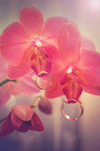 Floral decorations for wedding rings — Stock Photo