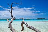 Bay of Rurutu island — Stock Photo