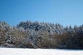 Aard en winter — Stockfoto