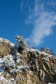 性质和冬季 — 图库照片