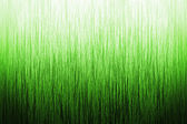 Background Grass — Stock Photo