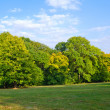 Glade green wood the blue sky with clouds — Stock Photo