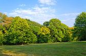 Zielona polana drewno niebieski niebo z chmurami — Zdjęcie stockowe
