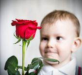Little boy and the big red rose — Stock Photo