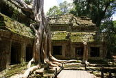 Ancient Ta prohn temple in Angkor , Cambodia — Stock Photo
