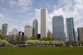 Park in Chicago — Stock Photo