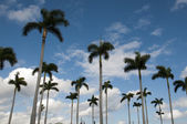 Row of Palm Trees — Stock Photo