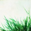 Royalty-Free Stock Photo: Grunge backgound with grass