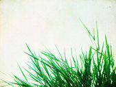Grunge backgound with grass — Stock Photo