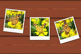 Vintage photos of butterfly — Stock Photo