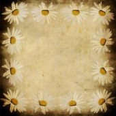 Grunge camomile frame — Stock Photo