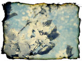 Grunge plum blossoms — Stock Photo