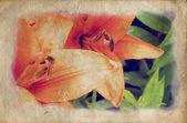 Grunge lily — Stock Photo