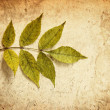 Foto de Stock  : Grunge leaves