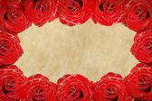 Rose frame — Stock Photo