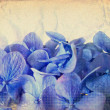 Grunge blue flowers — Stock Photo