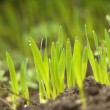 Green grass with earth — Stock Photo #9379301