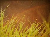 Green grass on grunge background — Stock Photo