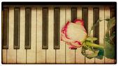 Müzik arka plan gül — Stok fotoğraf